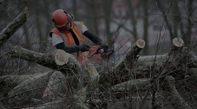 Lyndhurst Tree Service